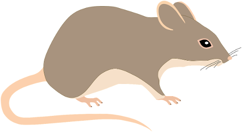 mouse-rat-rodent-animal-pest-tail-5117776