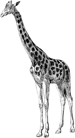 giraffe-animal-line-art-5553137