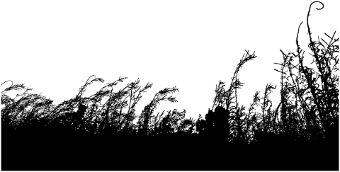 vegetation-grass-silhouette-wheat-5164325