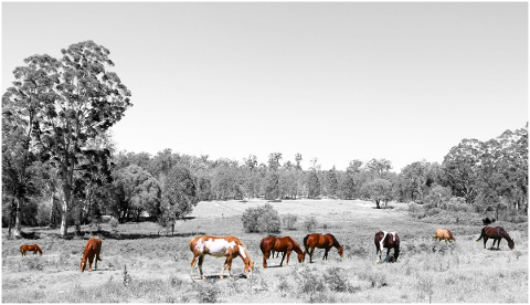 horses-art-animals-herd-grazing-5053325