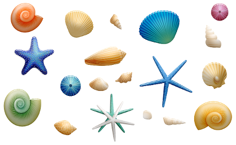 sea-shells-starfish-shells-beach-4217982