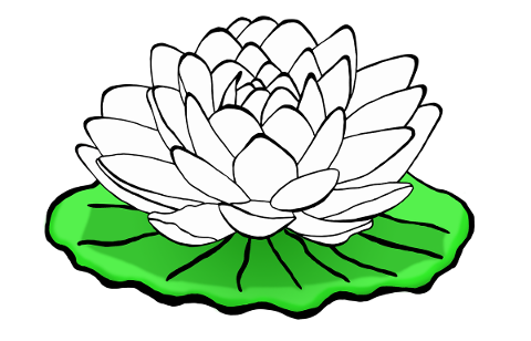 waterlily-waterlilies-lotus-white-5155111