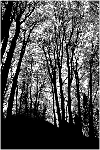 forest-trees-silhouette-branches-5164320