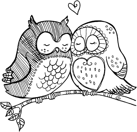birds-love-couple-owl-romance-4288121