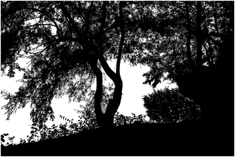 forest-trees-silhouette-branches-5161190