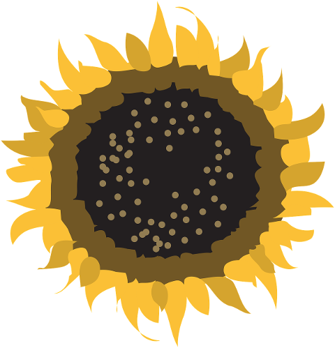 sunflower-flower-petals-seeds-6208434