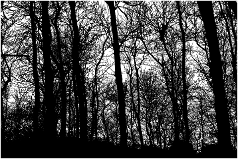 forest-trees-silhouette-branches-5138499