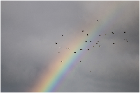 rainbow-the-birds-sky-5156768