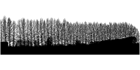forest-trees-silhouette-branches-5164389