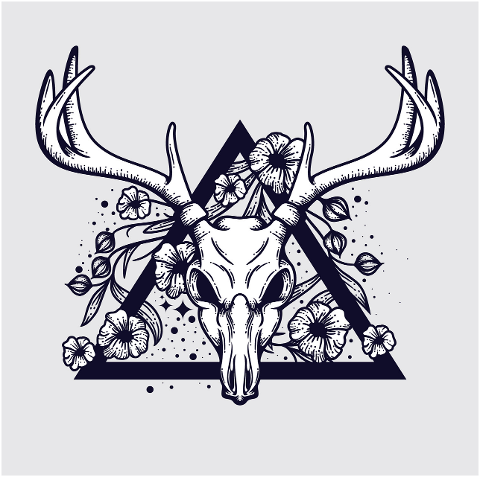deer-skull-head-animal-antlers-5850557