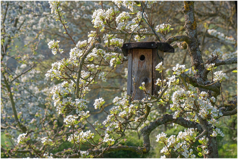 bird-feeder-aviary-nesting-box-tree-6049709