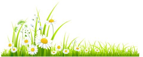 daisies-flowers-meadow-grass-5836761