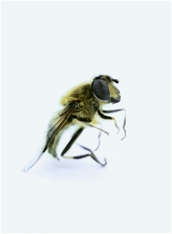 bee-isolated-bee-insect-nature-5135973