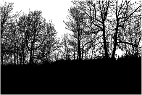 forest-trees-silhouette-branches-5188597