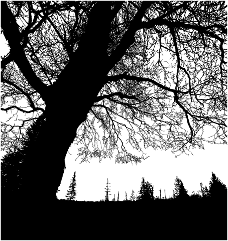 forest-trees-silhouette-branches-5164412