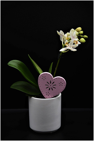 orchid-flower-pot-potted-plant-4848681