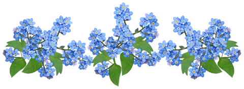 flowers-blue-forget-me-not-plants-4715577