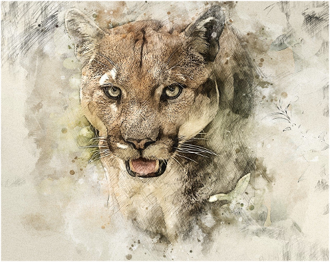 cougar-animal-photo-art-face-puma-6160236