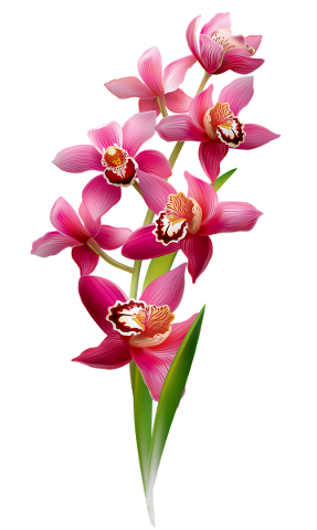 orchids-flowering-pink-flower-5102684