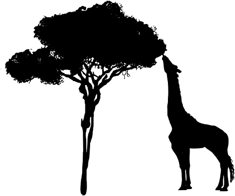 giraffe-tree-eating-nature-africa-4260188