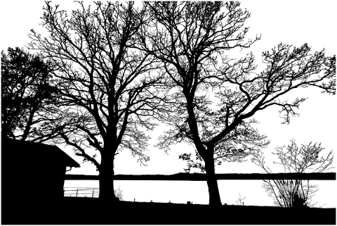 trees-lake-silhouette-branches-4761032
