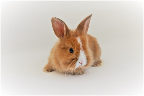 rabbit-brown-nager-hare-long-eared-5132644