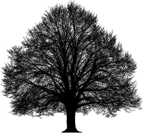 tree-branches-silhouette-trunk-6124866