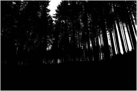 forest-trees-silhouette-branches-5188704