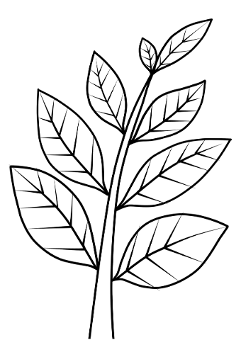 branches-tree-vectors-leaves-5046094