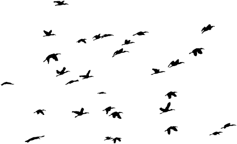 birds-silhouette-animals-flying-5138541