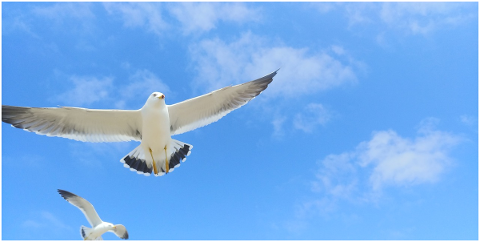 seagull-wing-new-animal-waterfowl-4943418
