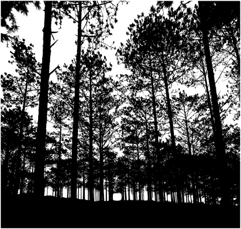 forest-trees-silhouette-branches-5161181
