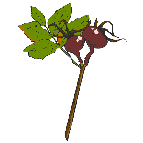 twig-rose-hip-nature-fall-leaf-4527983