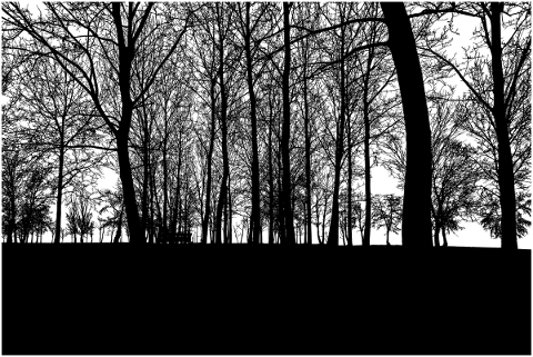 forest-trees-silhouette-branches-4774463