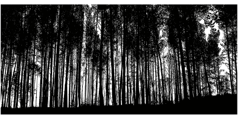 forest-trees-silhouette-detailed-4027242