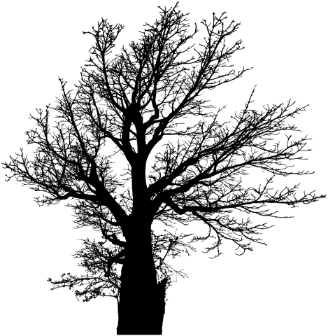 tree-branches-silhouette-trunk-5733481
