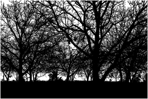 forest-trees-silhouette-branches-5164342