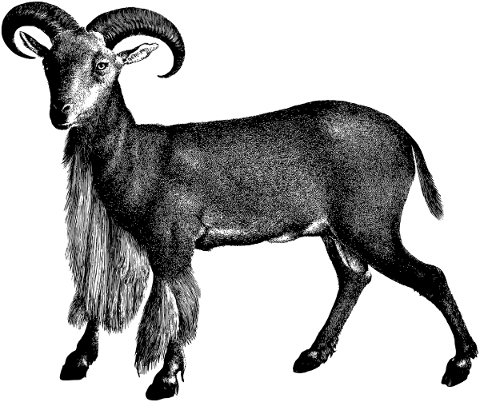 goat-ram-animal-line-art-vintage-5161176