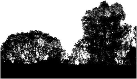 forest-trees-silhouette-branches-5188669