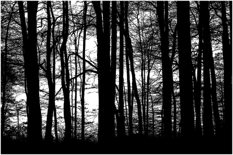forest-trees-silhouette-branches-5164395