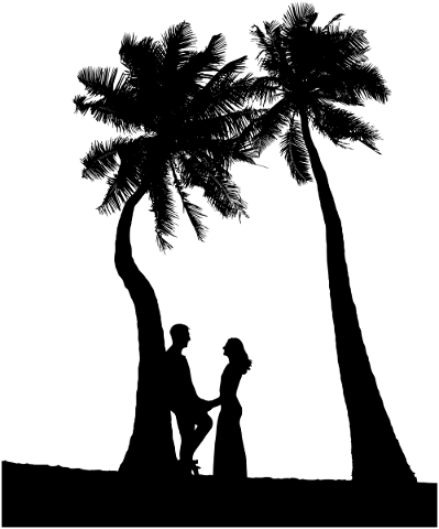 couple-palm-trees-silhouette-5733500