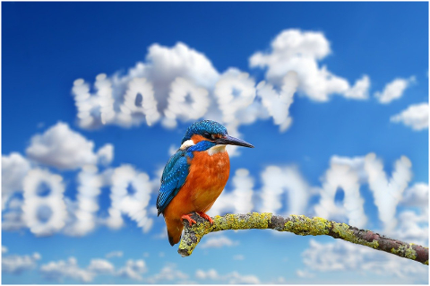 clouds-birthday-kingfisher-bird-6160808