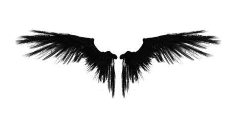 angel-wings-fairy-isolated-4870055