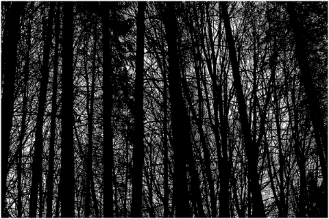 trees-landscape-silhouette-forest-5118226