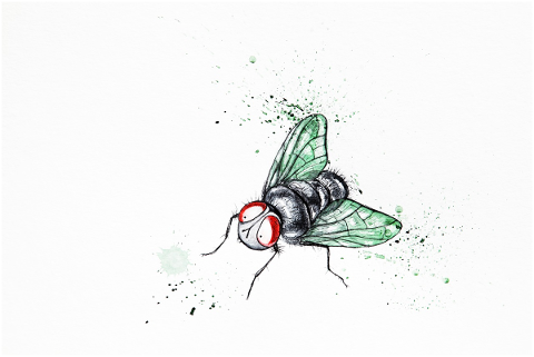 funny-cute-fly-watercolor-4703183