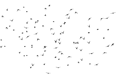 birds-silhouette-animals-flying-5184441