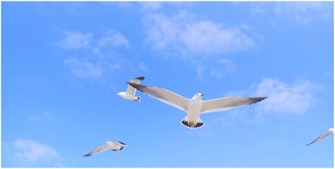 wing-sky-seagull-plane-i-cloud-4943421