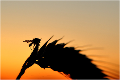 fly-silouhette-sunset-backlighting-4308662