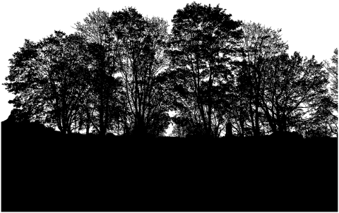 forest-trees-silhouette-branches-5161167