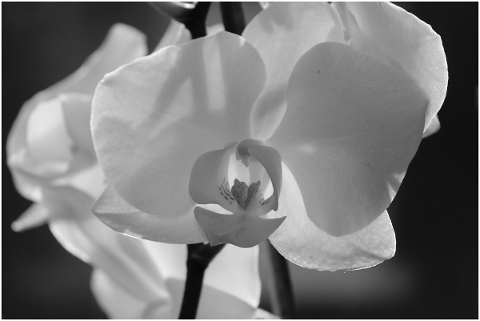 orchid-blossom-bloom-close-up-4806100